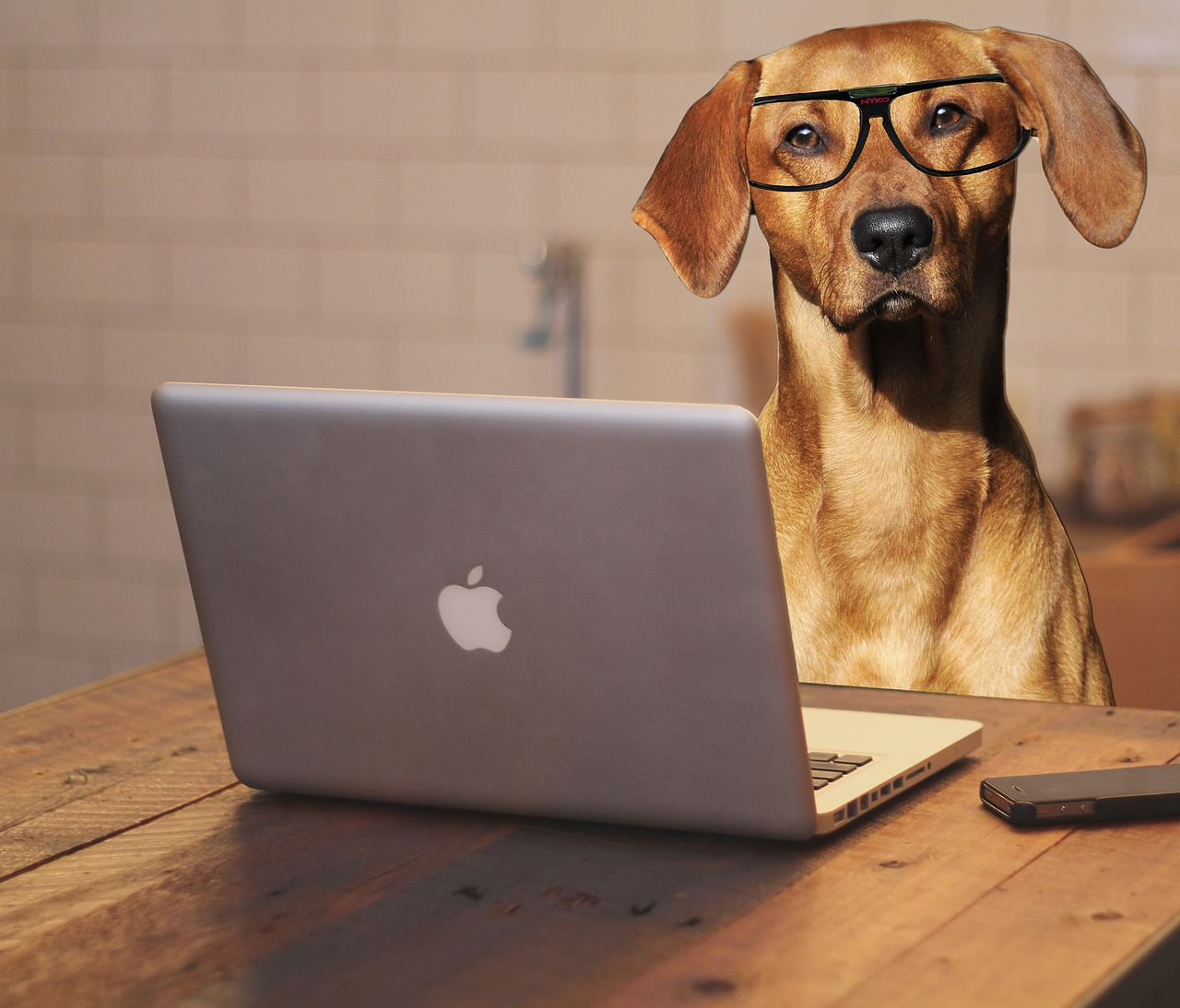 dog-laptop.jpg