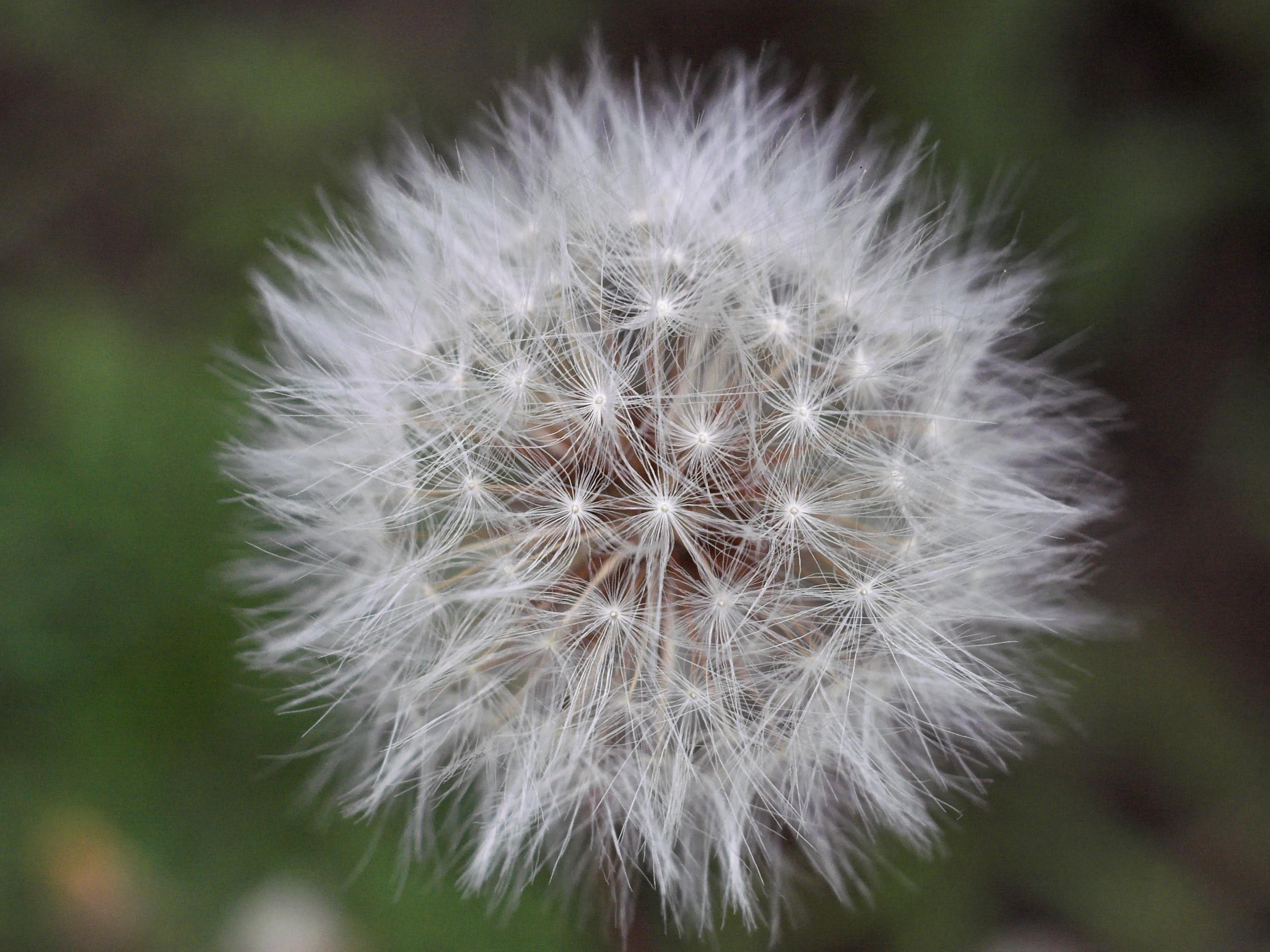 wishing.jpg